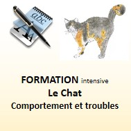 le comportement du chat : formation